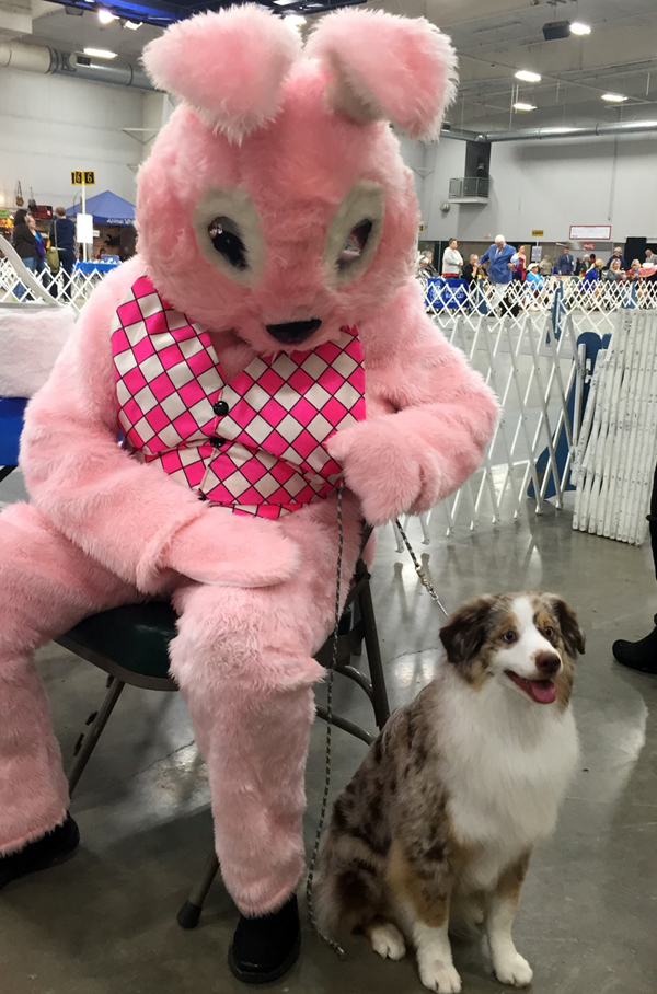 Shine is so such a confident dog even the Easter Bunny doesn't scare her.