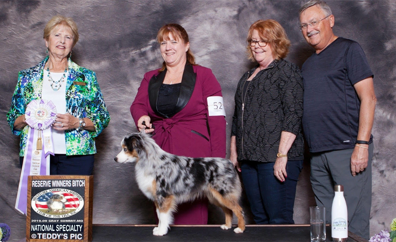Sparkle finished her championship at 9 months old by going Reserve Winner's Bitch at our National Speciality show.